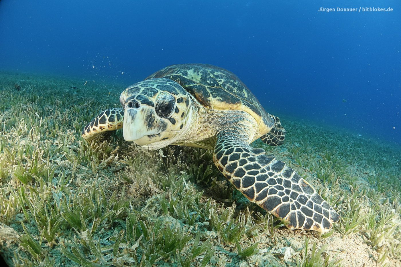 Resident Turtle at Lighthouse
